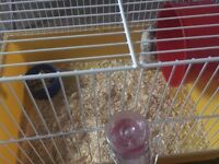 Hamster Cage with Hamster