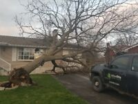 Tree Removal and Health Care