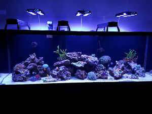 Saltwater aquarium, sumps, rock - 260gallon Starphire Display