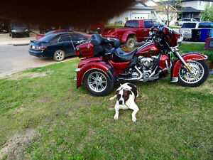 Harley trike and Trailer