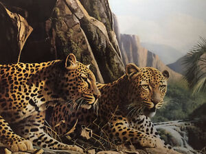 BEAUTIFUL FRAMED PRINT OF 2 LEOPARDS IN THE WILD