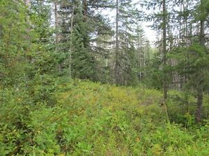 2 Acre Lot For Sale Residential Neighborhood Prince George British Columbia image 2
