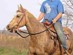 2006 aqha mare well broke price reduced.