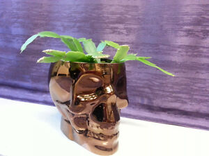 SKULL pot and Xmas cactus