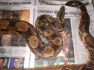 Snake Reptiles And Amphibians In British Columbia Kijiji Classifieds