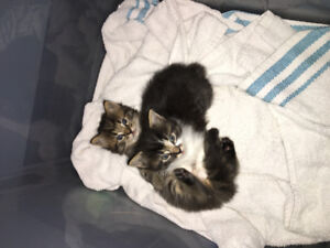 2 kittens looking for loving homes