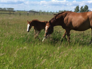 Horse Property wanted to purchase!
