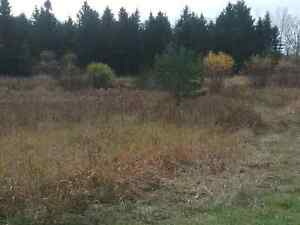 100 Acres for sale outside mount forest  Kitchener / Waterloo Kitchener Area image 4