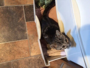 Kitten to give away to indoor home