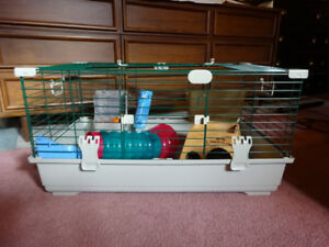 Guinea Pig Habitat PLUS all the accessories you need!