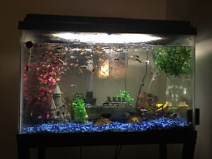 Fish tank and stand as is with guppies and pleco