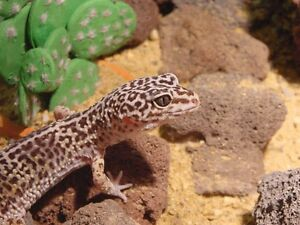 Need to rehome your exotic pet? Trust the expert in Barrie!