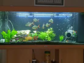 Aquarium Juwel Rio 450