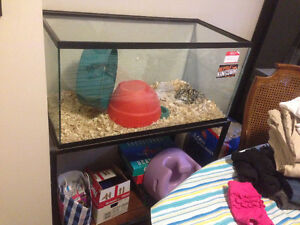 40 gallon tank with metal stand. FREE