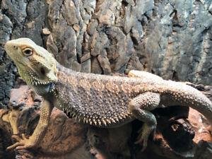 Reptiles for SALE!!
