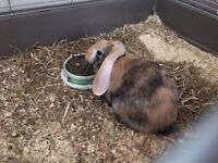 Rabbit & cage for sale