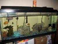 55 Gallon Fish Tank with Stand and Everything you Need to Set Up
