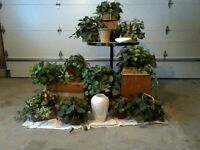 Silk & Artificial Potted Plants $5@ (deal for multiple buys)