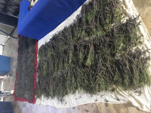 Free! Lots of lavender available. Perfect for wedding!
