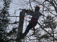 Tree cutting and removal (Free quote)