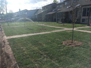 Kentucky Bluegrass Sod Delivery $.35/sqft