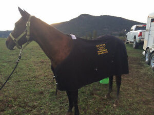 19 year old gelding needing a companion home.