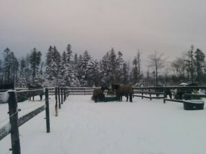 Looking for part time weekend stable hand in Hammonds Plains