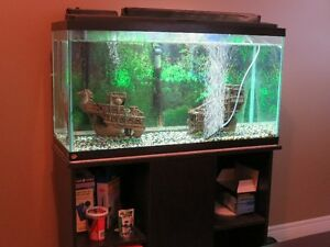 Fish tank filter 40 gallon adopt or rehome pets in for 40 gallon fish tank stand