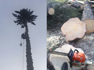 Tree removal and pruning services - Axe & Timber