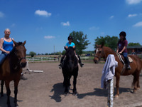 Affordable Horse Riding lessons