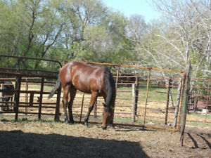 registered yearling QH colt