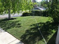 Is your lawn putting you down?