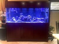 170 Gallon Salt Water Aquarium With All Accessories