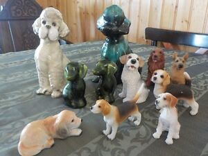 Collection Chien