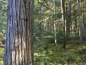 5 to 10 Acre Lots in the Blaeberry Valley Revelstoke British Columbia image 2