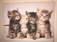 Kitten Canvas