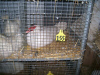Trails End Small Animal Auction New Livestock...check this out!