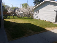 YOUR QUALITY LAWN CARE