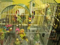 Baby Birds Available For Adoption At Gail Daigle's Aviary!