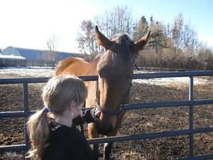 Equine - Assisted Learning*  Self- Awareness Skills for ADHD