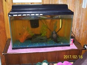 3 Aquariums and Fishes for sale