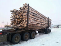 Loads of logs for sale