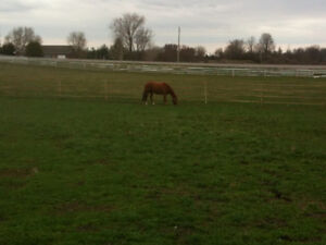 Hobby/Horse Farm for sale or rent