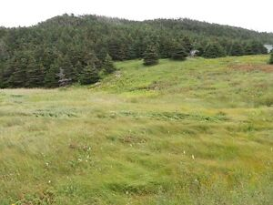 Land For Sale Point Verde Placentia Area St. John's Newfoundland image 6
