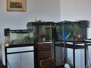 Over 100 Fish and Tank must go