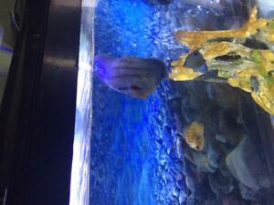 /large fish  wanted