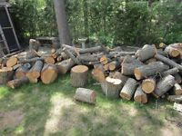 Four OAK Trees Removed - Great Wood for Sale