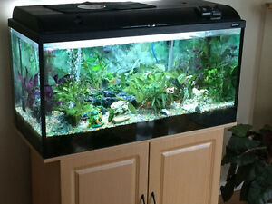 Fresh water fish tank with storage/ stand cabinet and supplies