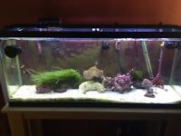 Established saltwater tank with thriving copepods
