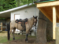 2004 Good looking Buckskin -Free to the right home.